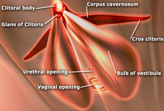 parts-of-the-vagina-representation